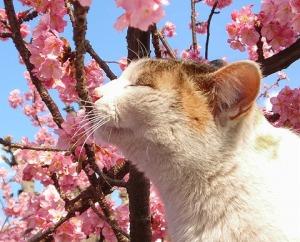 spring_cat.