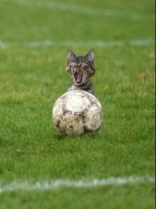 soccer_cat_futbol